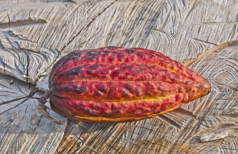 Cacao strąk fotografia stock