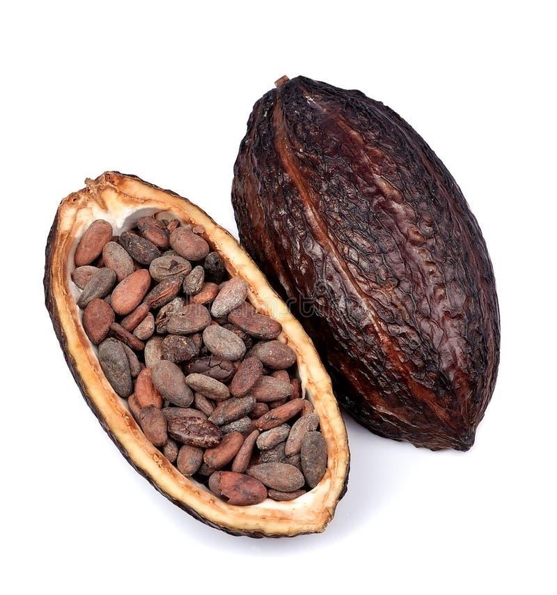 Cacao strąk odizolowywający fotografia stock