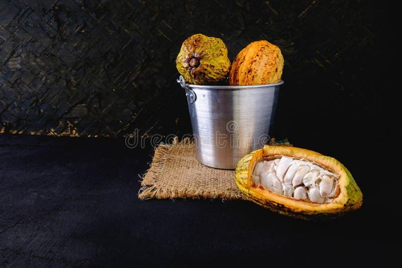 Cacao y vainas frescos del cacao foto de archivo