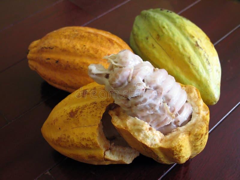 Cacaobonen stock afbeeldingen