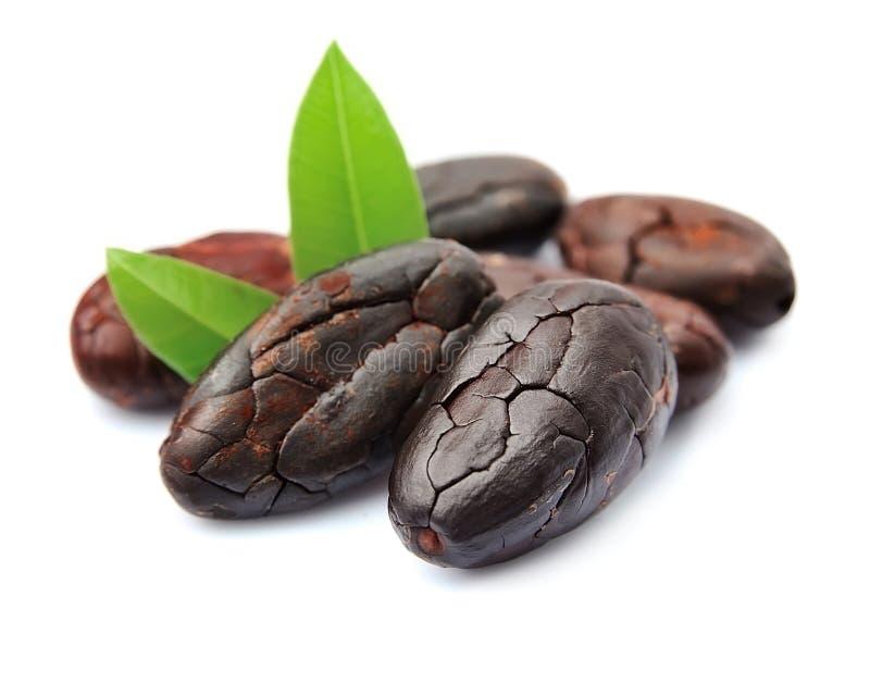 Cacaobonen met bladeren royalty-vrije stock foto's