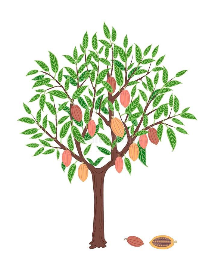 Cacaoboom stock illustratie
