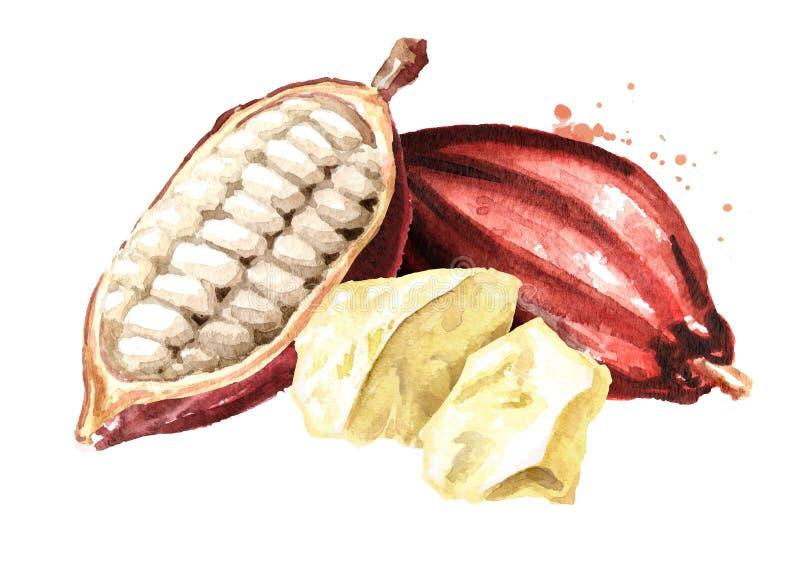 Cacaoboter met Cacaopeulen Waterverfhand getrokken die illustratie, op witte achtergrond wordt geïsoleerd royalty-vrije illustratie