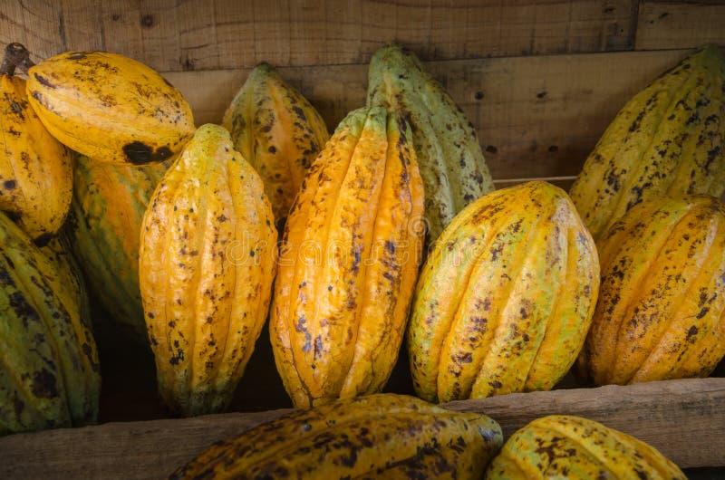 Cacaofruit, ruwe cacaobonen, de achtergrond van de Cacaopeul stock foto's