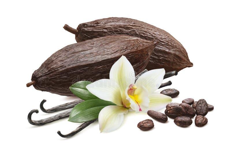 Cacaopulaten en vanillabonen, geïsoleerd op witte achtergrond stock afbeelding
