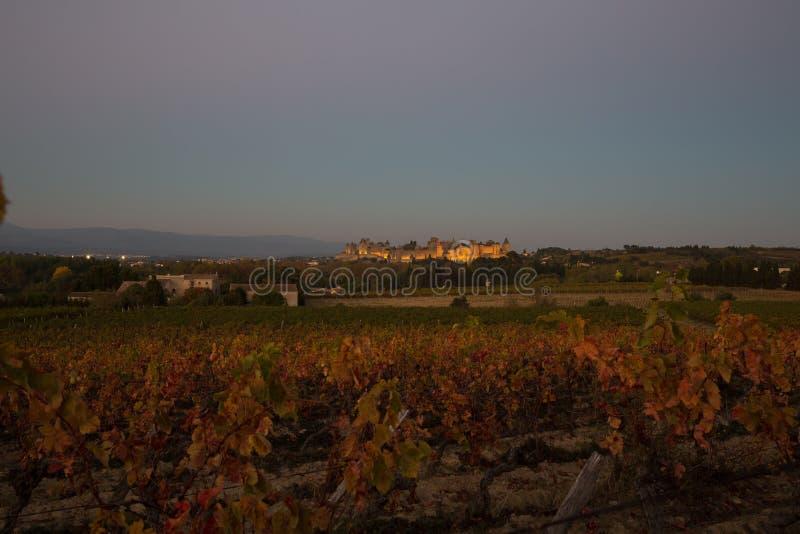 Cacassonne wina jard w półmroku obrazy stock