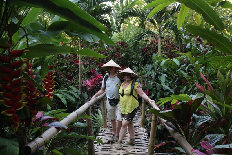 Cacau, café e plantação da especiaria na vila de Kalibaru em Java Indonesia do leste imagem de stock
