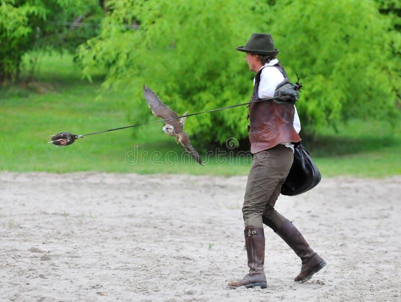 Caccia col falcone fotografie stock libere da diritti