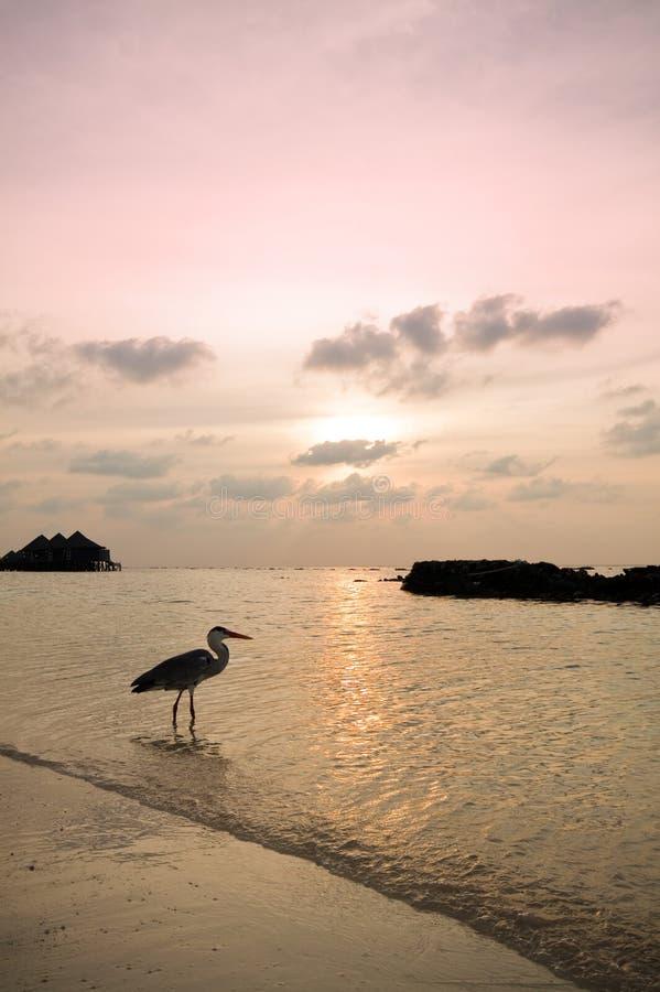 Cacciando al tramonto immagini stock