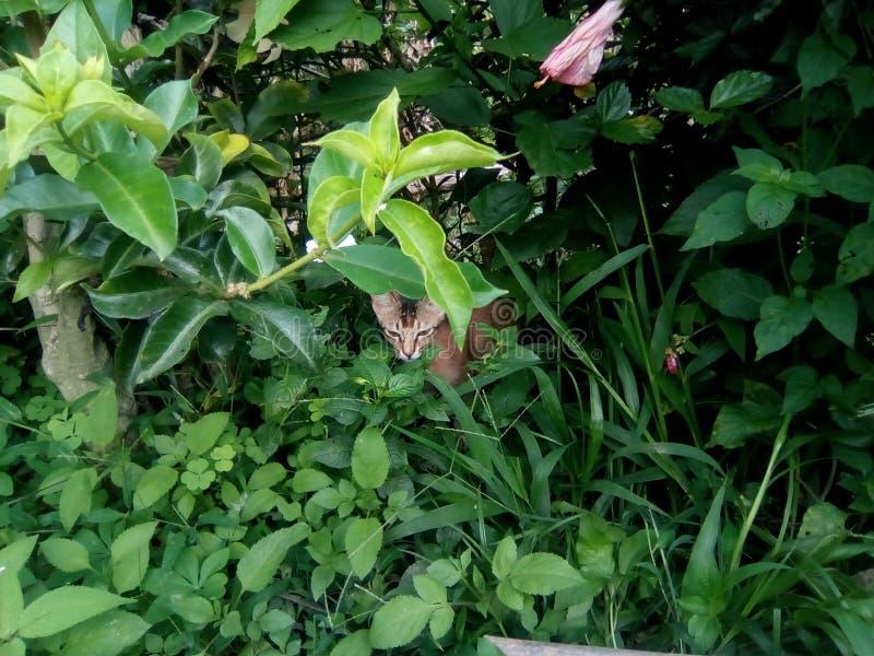 Caché derrière l'herbe photo libre de droits