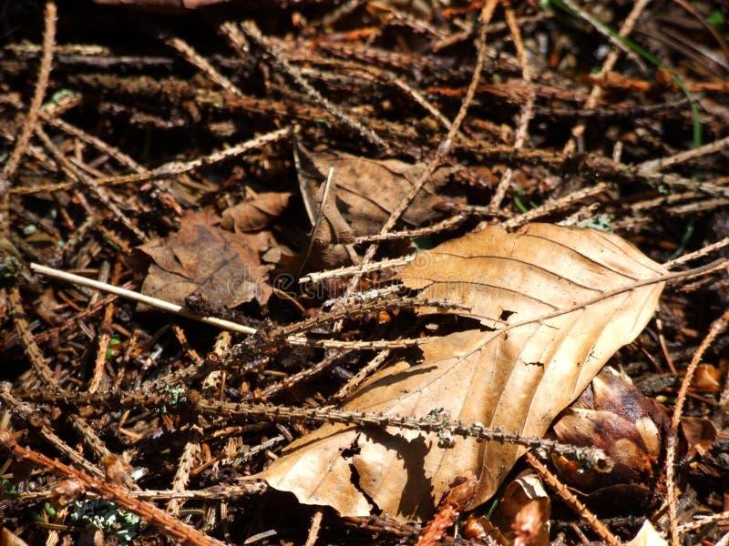 Cache de forêt photographie stock