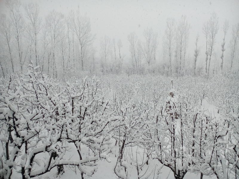 Cachemira nevada imagen de archivo libre de regalías