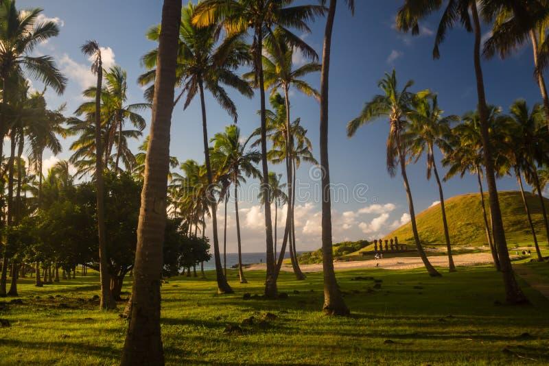 Cacho da palma na praia de Anakena na Ilha de Páscoa fotos de stock