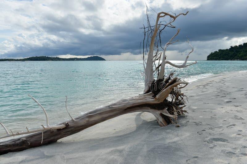 Cacho inoperante na costa da praia tropical imagem de stock royalty free