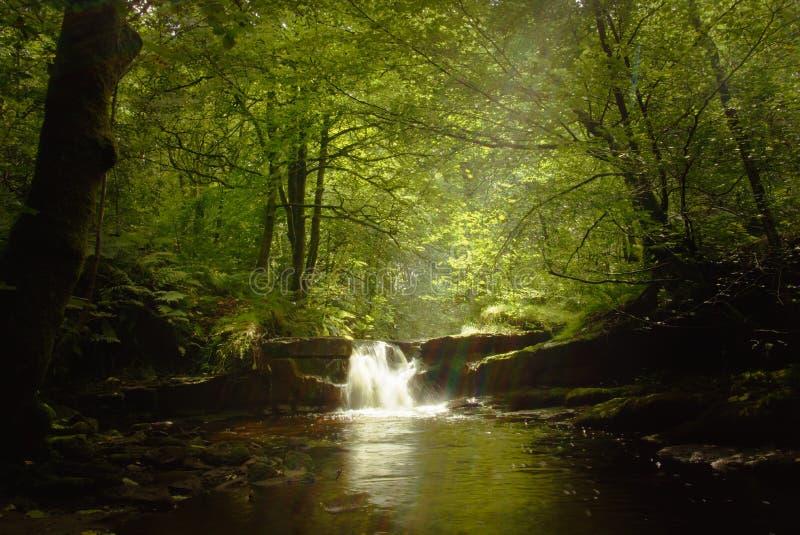 Cachoeira após a chuva imagens de stock