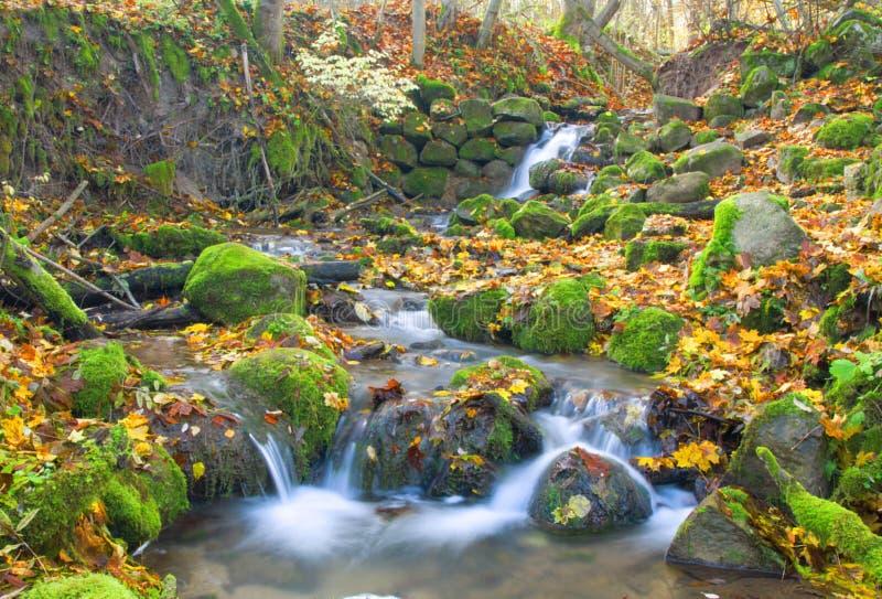 Cachoeira bonita da cascata na floresta do outono imagem de stock