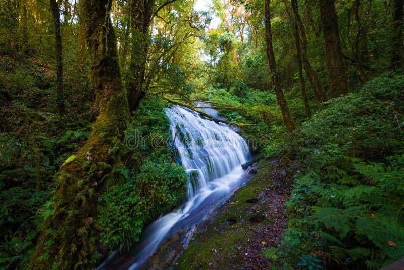 Cachoeira bonita em Tailândia do norte, na natureza t de Kew Mae Pan imagens de stock royalty free