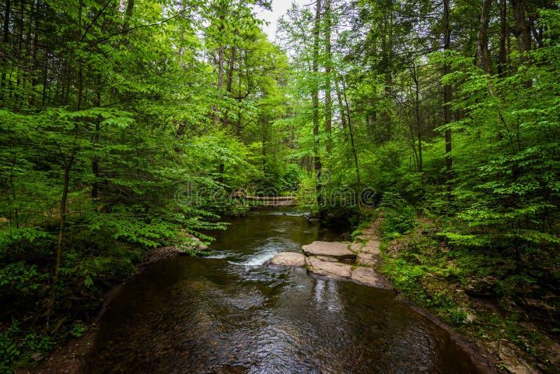 Cachoeira cênico em Ricketts Glen State Park no Poconos em P imagem de stock