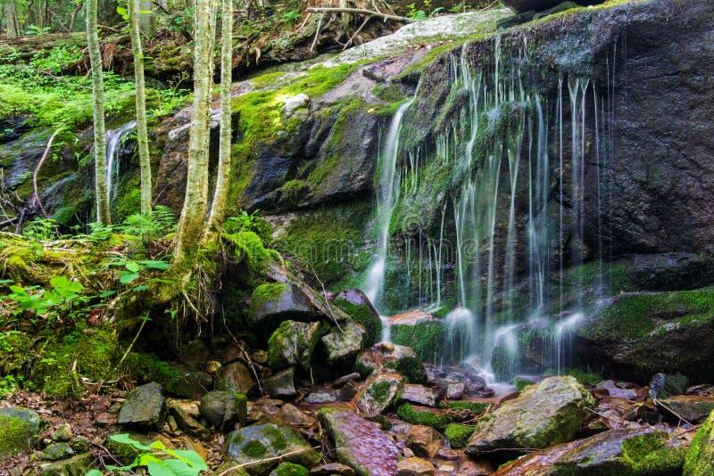 Cachoeira calma na floresta foto de stock