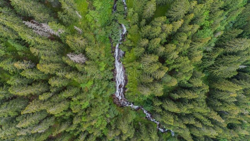 Cachoeira Cascada tumultuoso Zbuciumata Montanhas de Fagaras, Romania fotos de stock royalty free