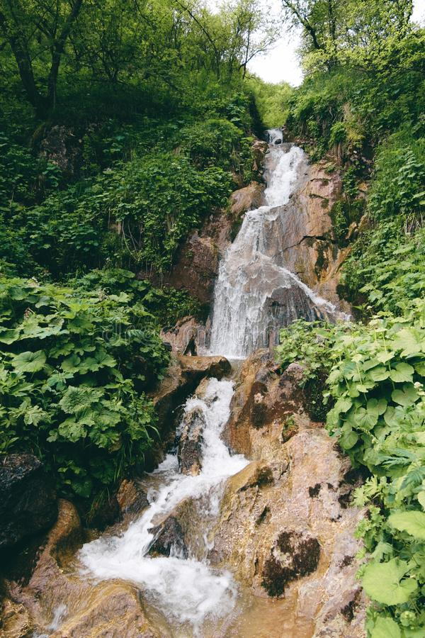 Cachoeira da montanha na floresta tropical verde e folhas das plantas fotos de stock