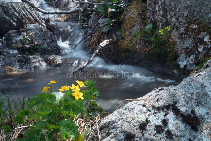 Cachoeira da montanha Paisagem muito bonita com a montanha waterfal imagens de stock royalty free