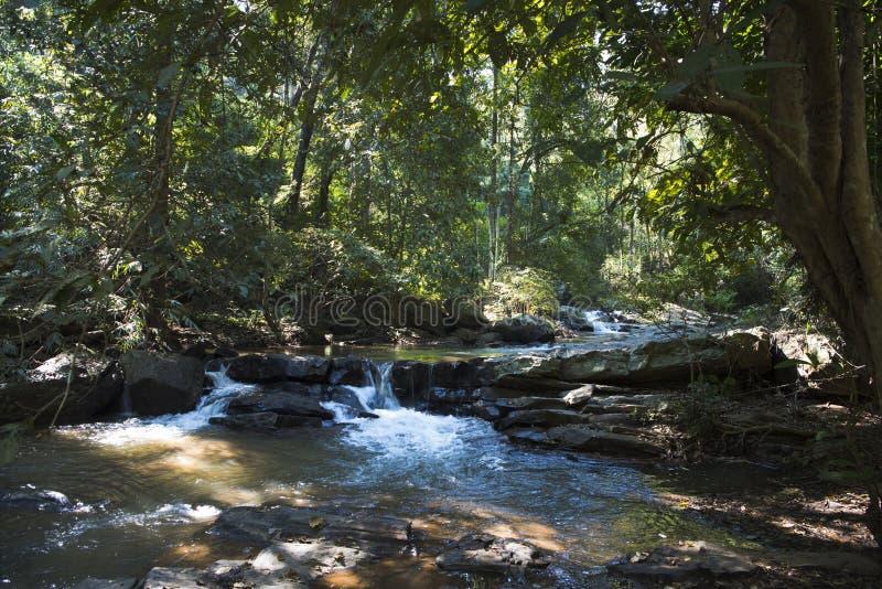 Cachoeira da selva, Chiang Mai foto de stock