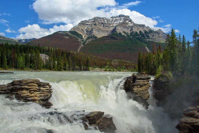 Cachoeira de Athabasca no parque nacional de jaspe fotos de stock