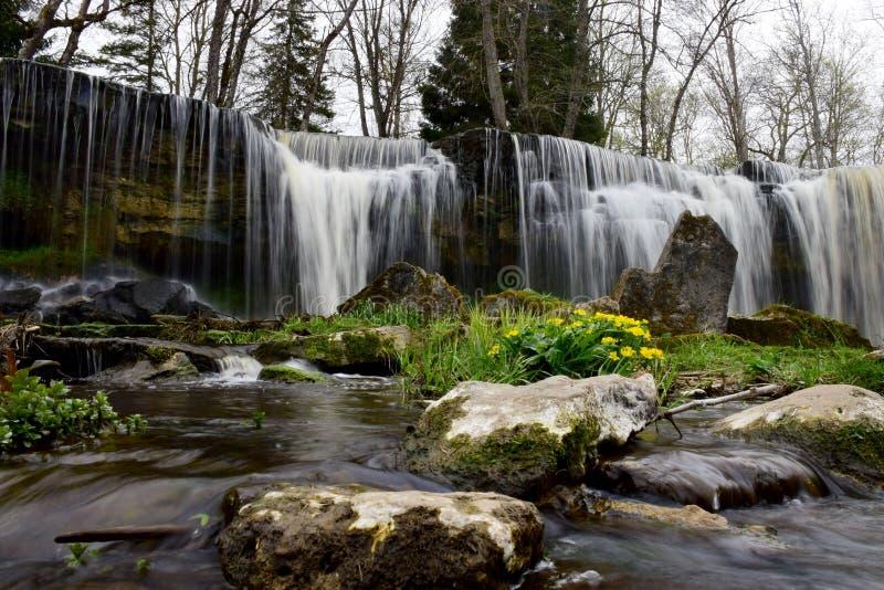 Cachoeira de encantamento com flores e pedras da mola fotos de stock royalty free