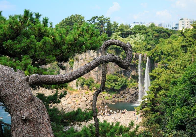 Cachoeira de Jeongbang, ilha de Jeju imagens de stock