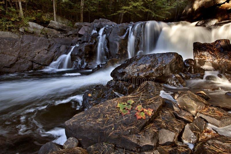 Cachoeira de Muskoka Ontário do parque do Algonquin fotos de stock