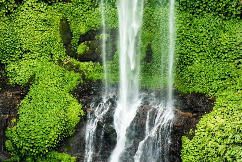 A cachoeira de Sekumpul em Bali cercou pela floresta tropical foto de stock