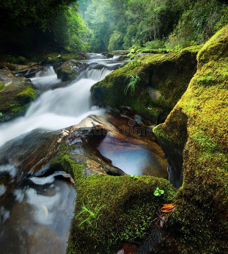 Cachoeira densa da floresta foto de stock