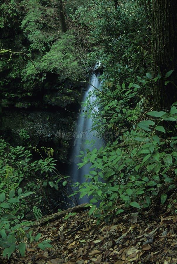 Cachoeira, Dissipador Do WO, Smokies Fotos de Stock Royalty Free