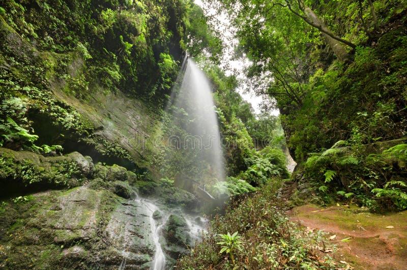 Cachoeira do Los Tilos e floresta de Laurisilva no La Palma, Ilhas Canárias, Espanha fotos de stock