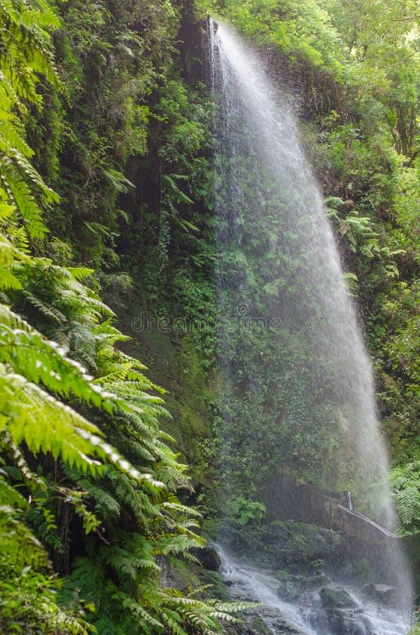 Cachoeira do Los Tilos (La Palma) fotografia de stock