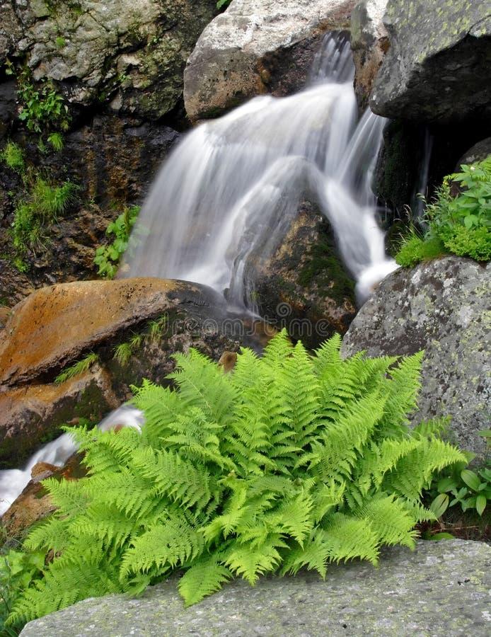 Cachoeira do verão com fern foto de stock