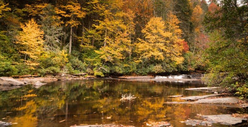 Cachoeira e floresta na queda fotos de stock