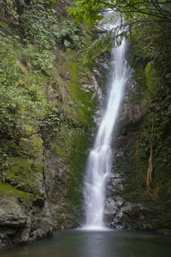 Cachoeira em Bush nativo fotos de stock royalty free