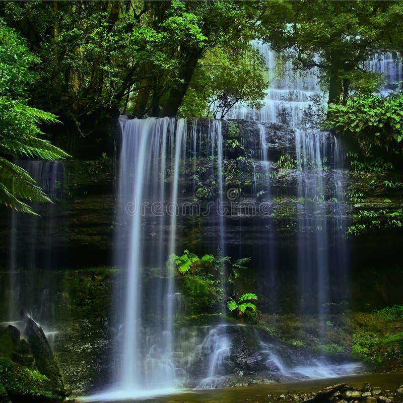 Cachoeira em Tasmânia 1 fotografia de stock royalty free