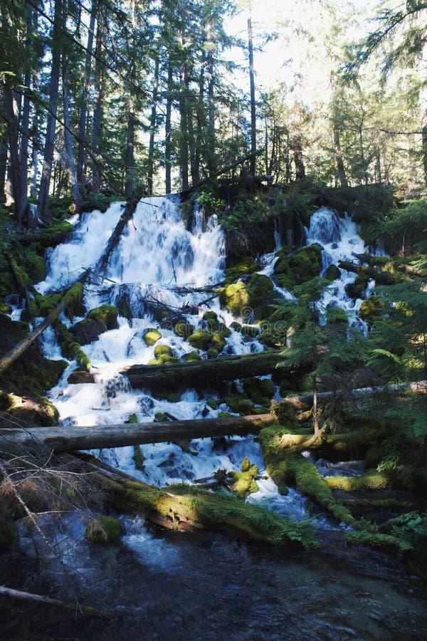 Cachoeira em um Forrest imagens de stock