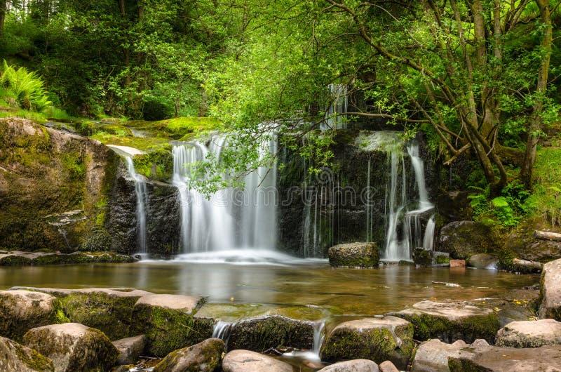 Cachoeira em uma madeira imagem de stock