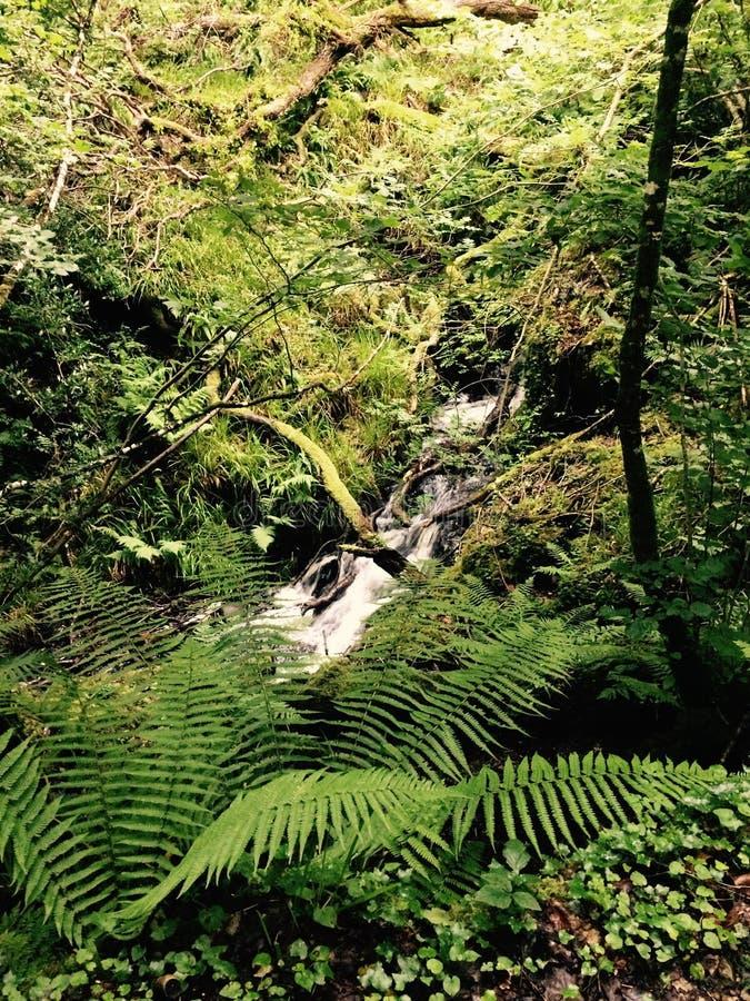 Cachoeira escondida foto de stock royalty free