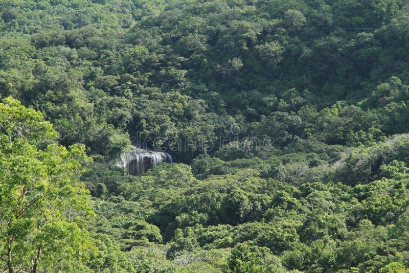 Download Cachoeira na selva foto de stock. Imagem de escondido - 29828966