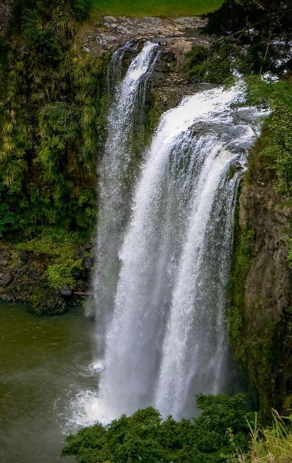 Cachoeira espetacular das quedas de Whangarei, Nova Zelândia imagem de stock royalty free