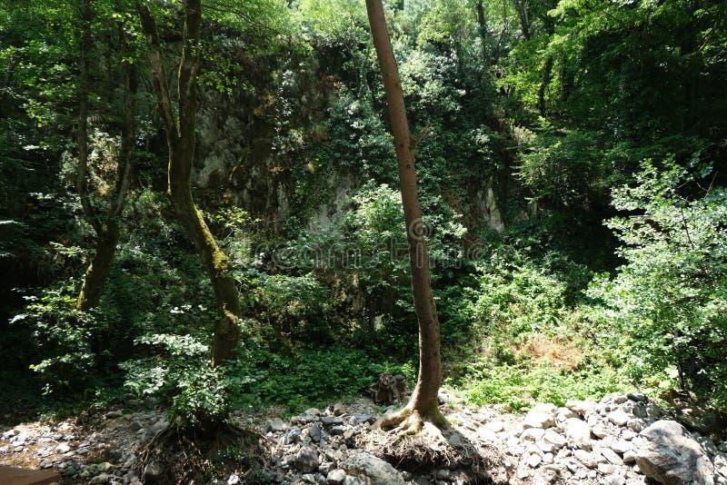 Cachoeira Imagem da cachoeira magnífica que flui das profundidades da cachoeira de Sudusen da floresta Yalova, Turquia fotos de stock royalty free