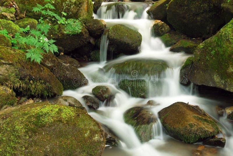 Cachoeira macia na floresta foto de stock