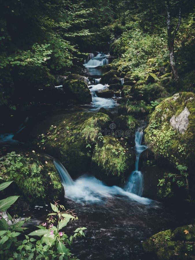 Cachoeira minúscula na madeira imagem de stock