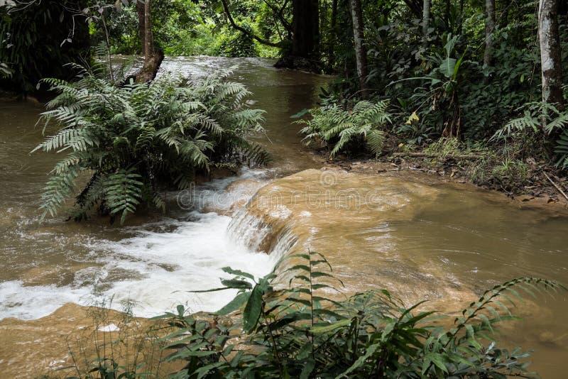 cachoeira na cascata da floresta úmida na água da floresta que flui no tro foto de stock