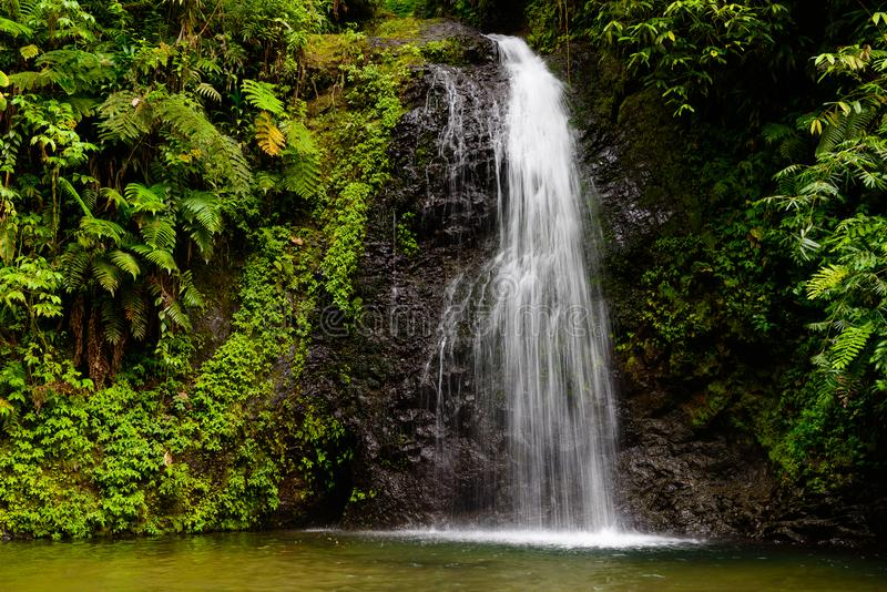 Cachoeira na floresta úmida de Martinica fotos de stock royalty free